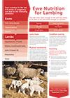 Ewe Nutrition Flyer